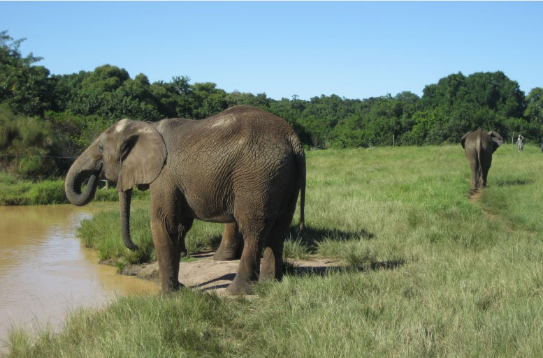 elephants at Waterhole web