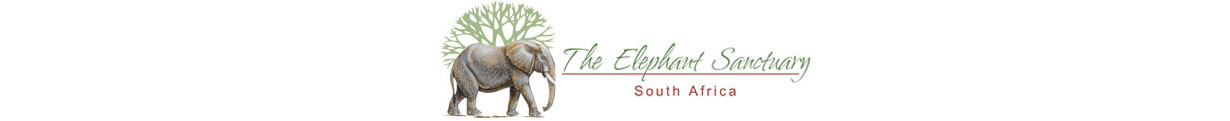 Elephant Sanctuary South Africa